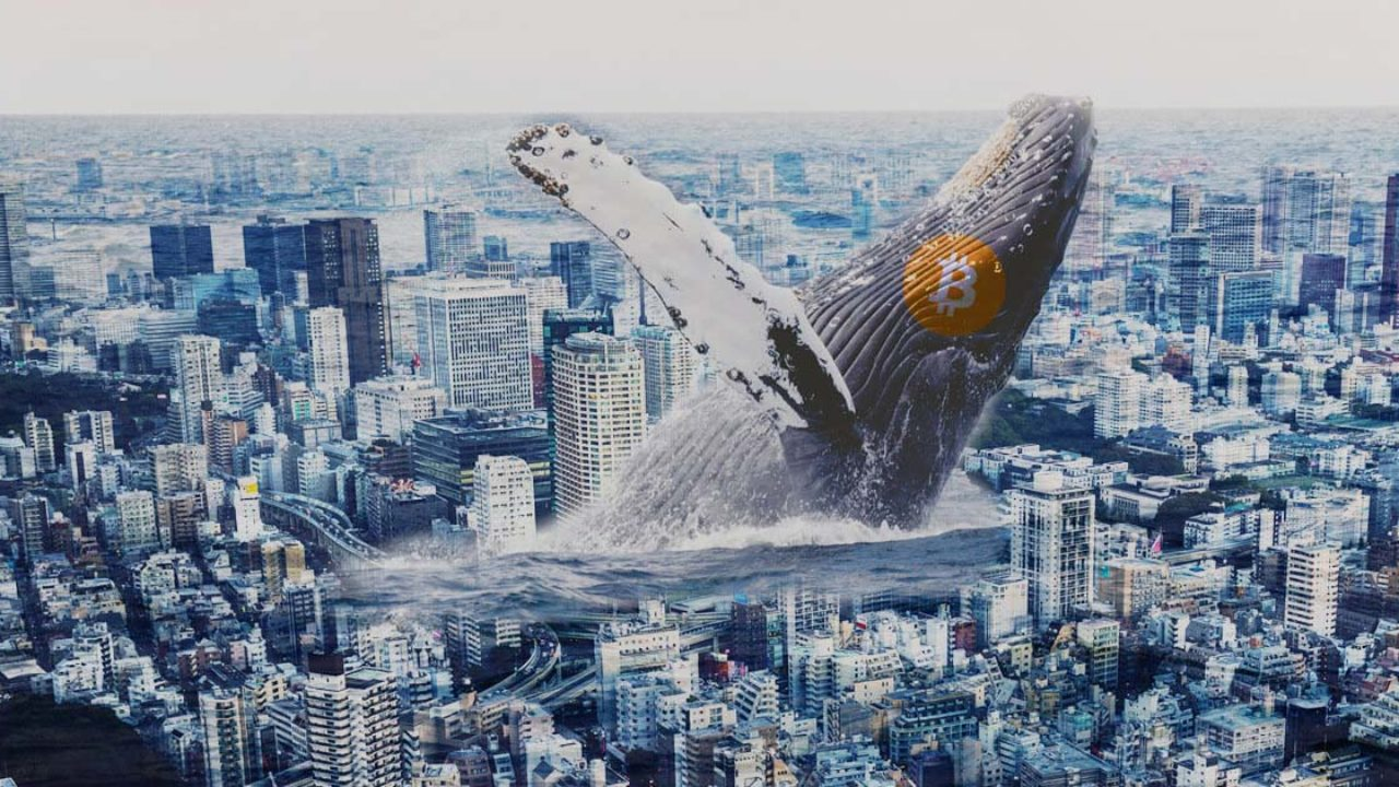 Эксперт Питер Шифф: киты зарабатывают за счет мелких держателей биткоина